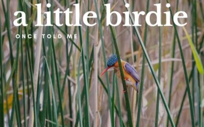 A little birdie once told me …